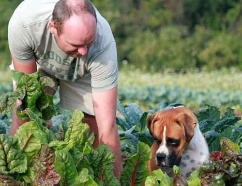 7 Ways Gardening Improves Your Mind and Body