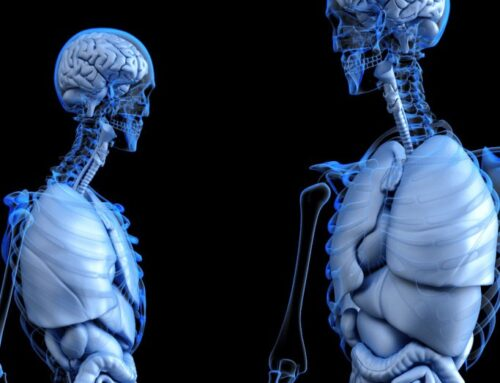 All About the Endocannabinoid System