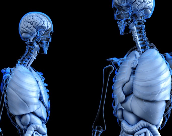 CBD and the the Endocannabinoid System